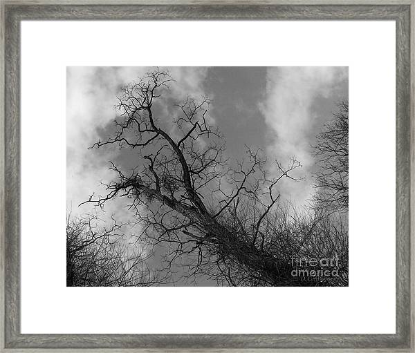 Up Tree Framed Print