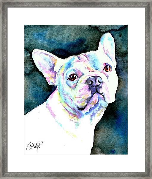 White French Bulldog Framed Print