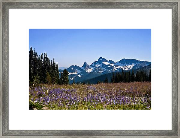 Wildflowers In The Cascades Framed Print