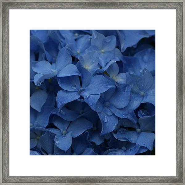 Blue Dew Framed Print