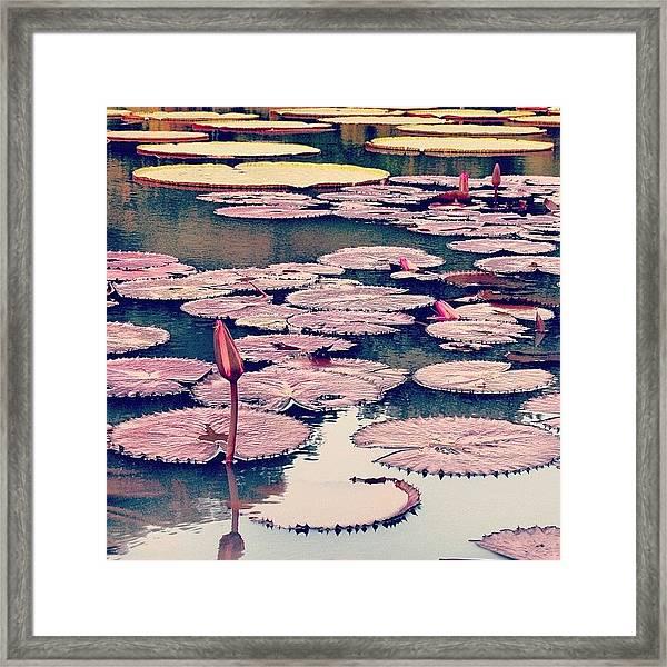 #instahub #instagood #instamood Framed Print