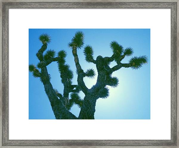 Joshua Tree Silhouette Framed Print by Claire Plowman