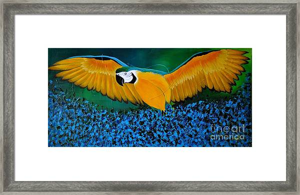 Macaw On The Rise Framed Print