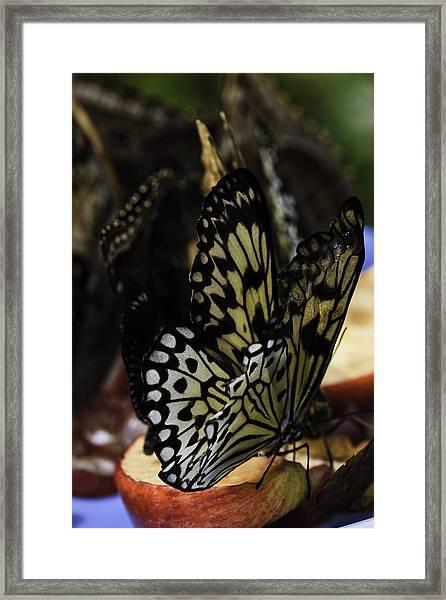 Paper Kite Butterfly Framed Print