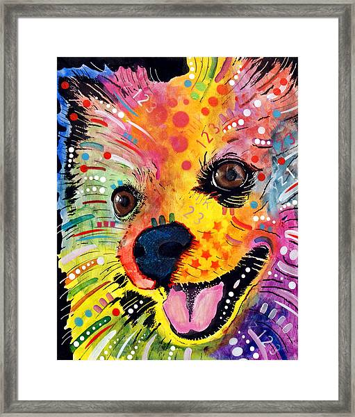 Pomeranian Framed Print