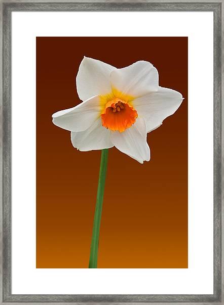 Spring Bulb Framed Print