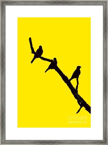 3 Birds On A Limb Framed Print