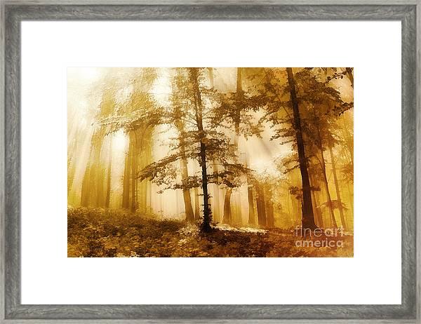 Golden Forest  Framed Print by Odon Czintos