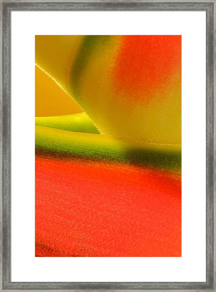Photograph Of A Lobster Claws Heliconia Framed Print
