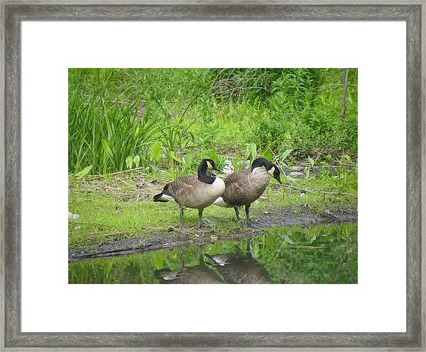 Wild Life Framed Print by Gerald Kloss
