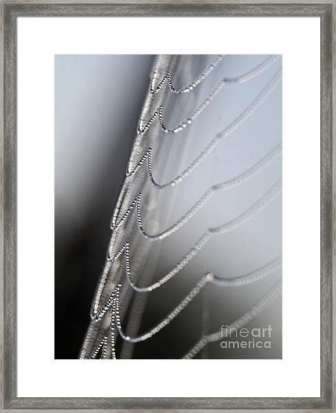 Spiderweb Framed Print