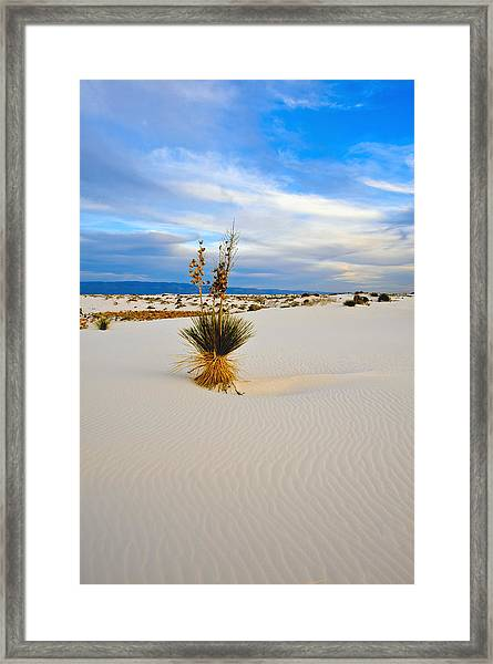 White Sands Framed Print by Larry Gohl