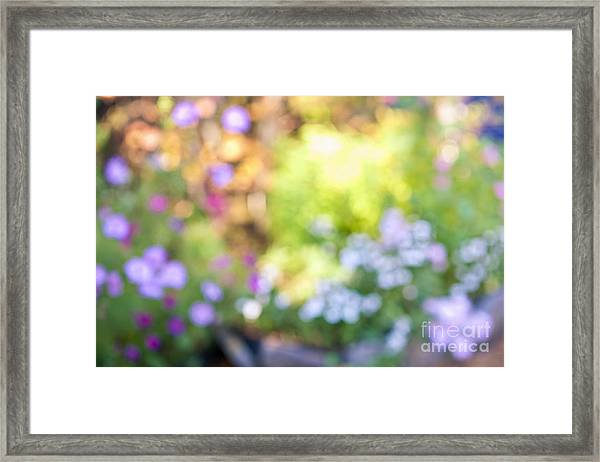 Flower Garden In Sunshine Framed Print