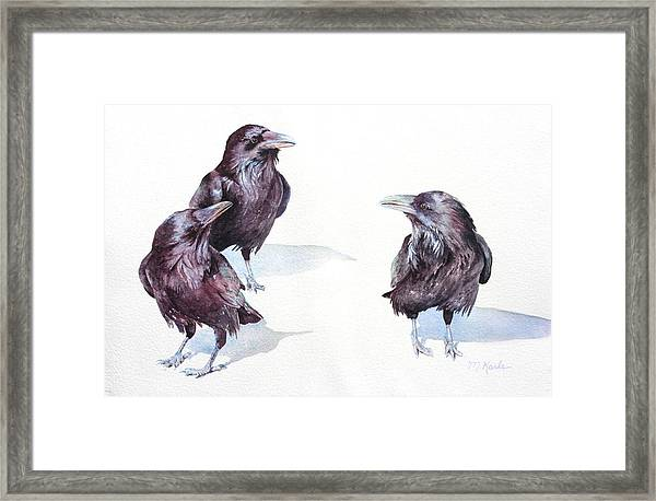 A Conspiracy Of Ravens Framed Print