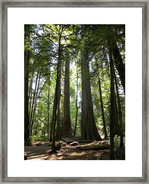 A Green World Framed Print