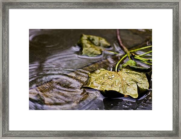 A Leaf In The Rain Framed Print