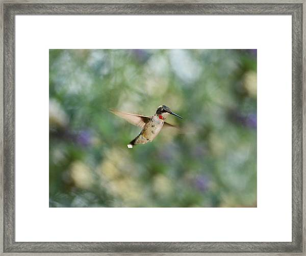 A Little Flash Of Red Framed Print