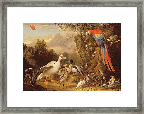 A Macaw - Ducks - Parrots And Other Birds In A Landscape Framed Print