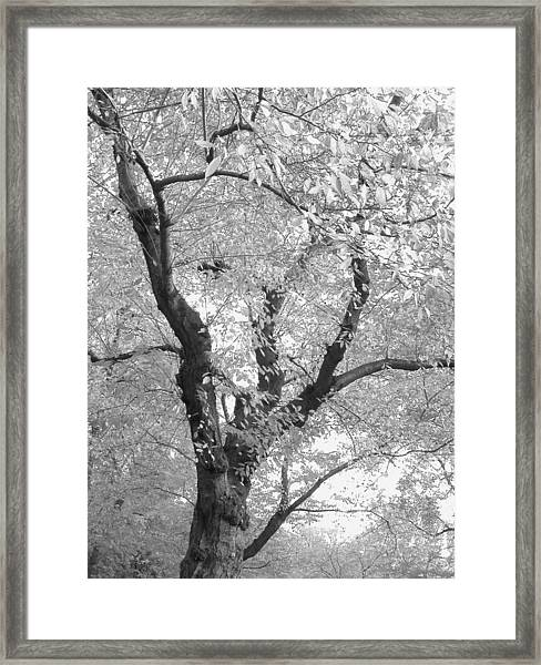 A Passing Shadow Framed Print