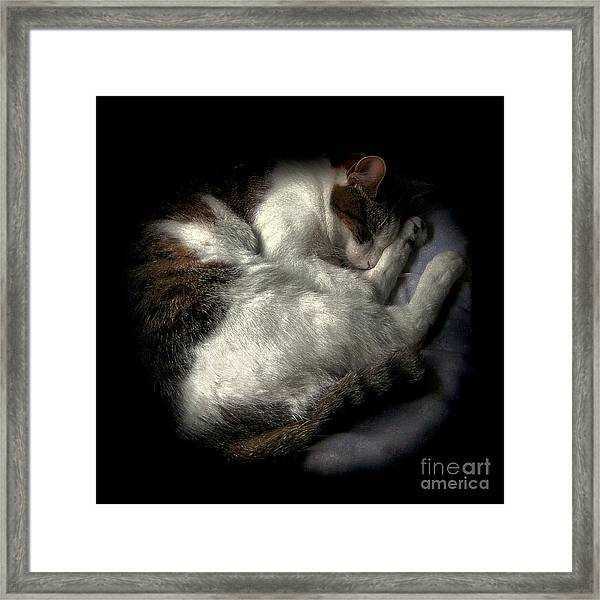 A Patch Of Sun 2 Framed Print
