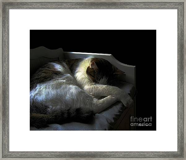 A Patch Of Sun Framed Print