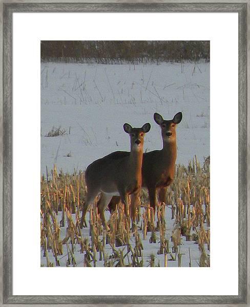 A Perfect Pair Framed Print