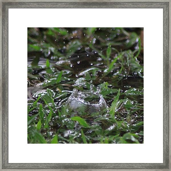 A Rain Drop Hits The Grass In My Framed Print