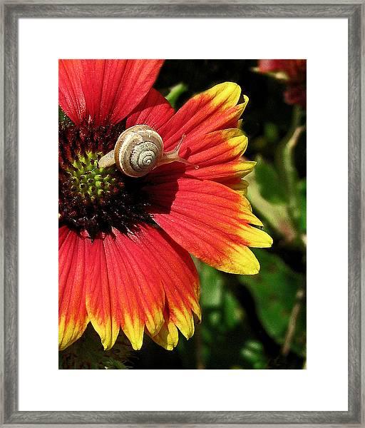 A Snail's Pace Framed Print