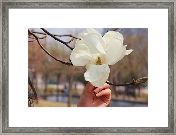 A Soft Touch Framed Print by Michael C Crane