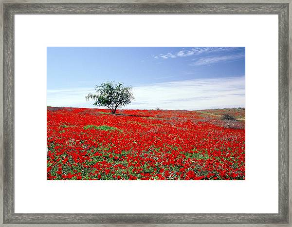 A Tree In A Red Sea Framed Print