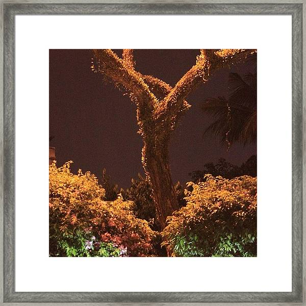 A Tree Lonely At Night, By My Lens Framed Print