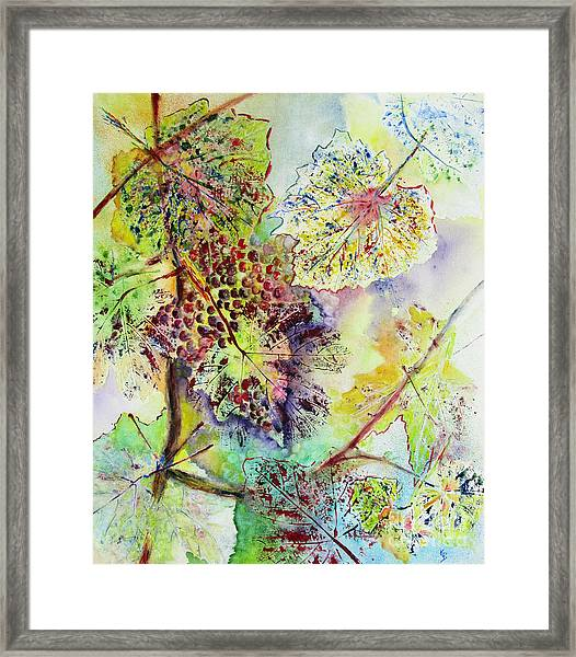 A Vineyard Morning Framed Print