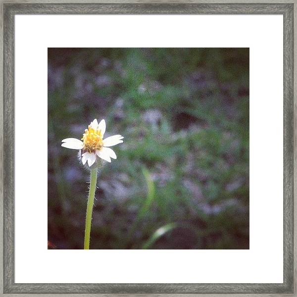 A Wild Flower, Grows Almost Everywhere Framed Print