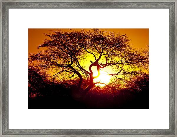 African Tree Framed Print