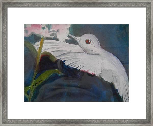 Albino Humingbird Framed Print