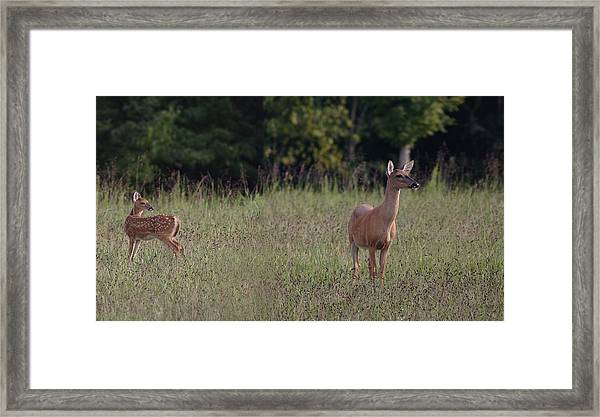 Alert Doe And Fawn Framed Print