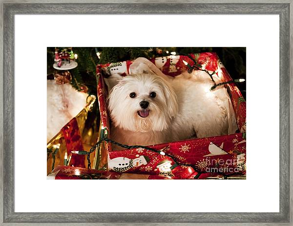 All Wrapped Up Framed Print