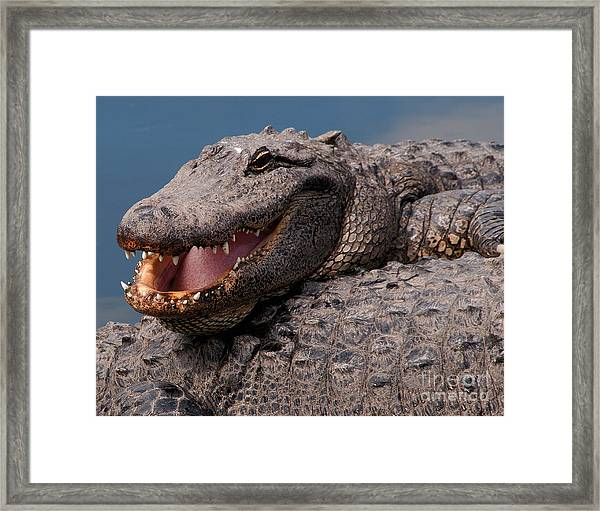 Alligator Smile Framed Print