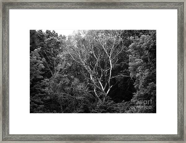 Alone In The Woods Framed Print by Anne Boyes