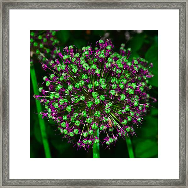 Alpine Bow Framed Print