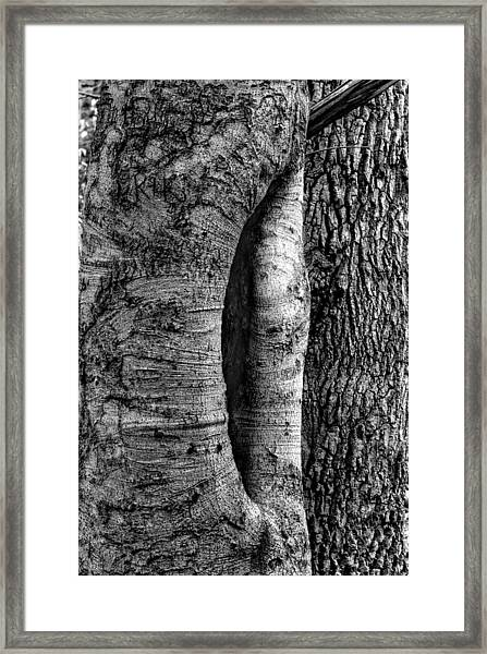 An Open Tree Framed Print