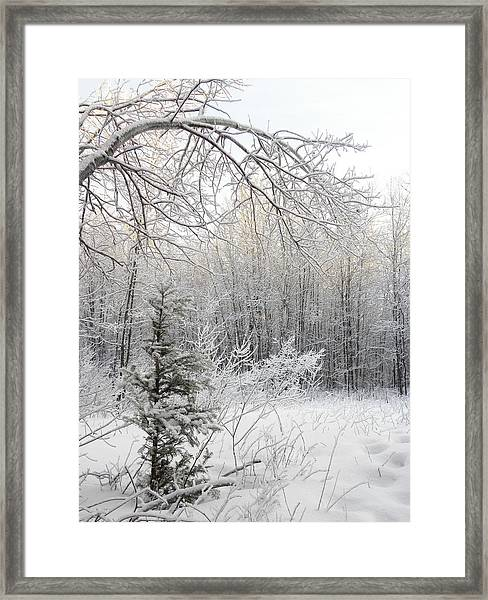 And More Snow Framed Print