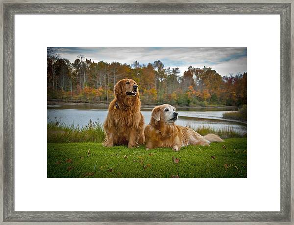 Framed Print featuring the photograph Angus And Lucky by Williams-Cairns Photography LLC