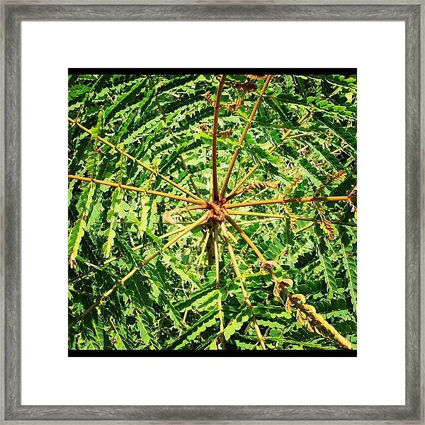Another Tropical Wonder. By My Lens Framed Print