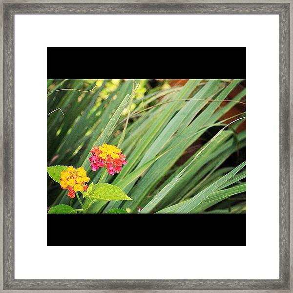 Another Wild Flower By My Lens, A Truly Framed Print