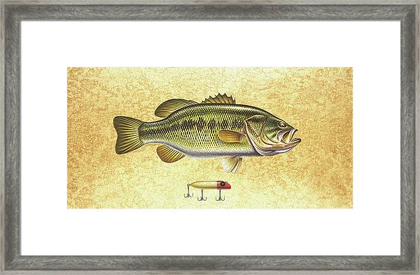 Antique Lure And Bass Framed Print
