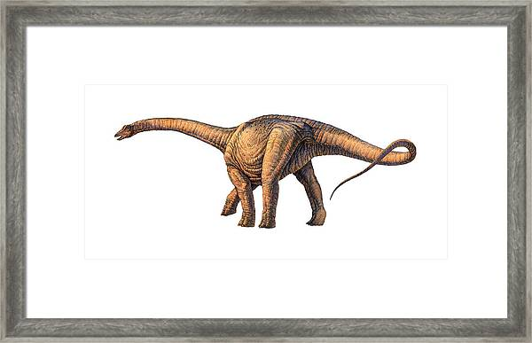 Argentinosaurus Dinosaur Framed Print by Joe Tucciarone