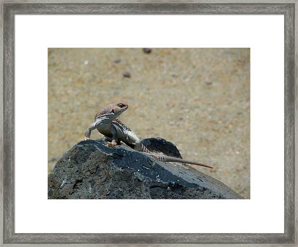 Arizona Wildlife Framed Print by Wayne Toutaint