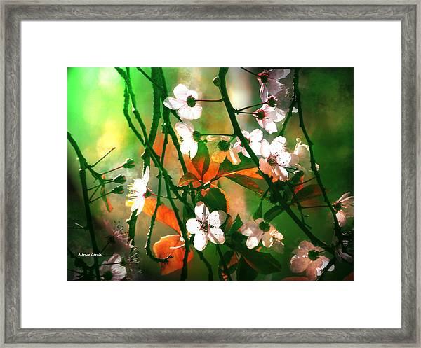 Armonia En La Naturaleza Framed Print