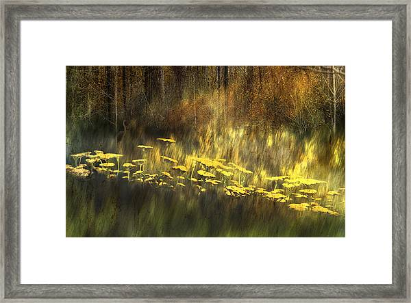 As Nature Intended Framed Print
